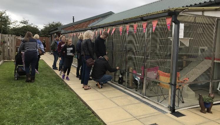 Sunday Funday @ Brent Knoll Animal Centre